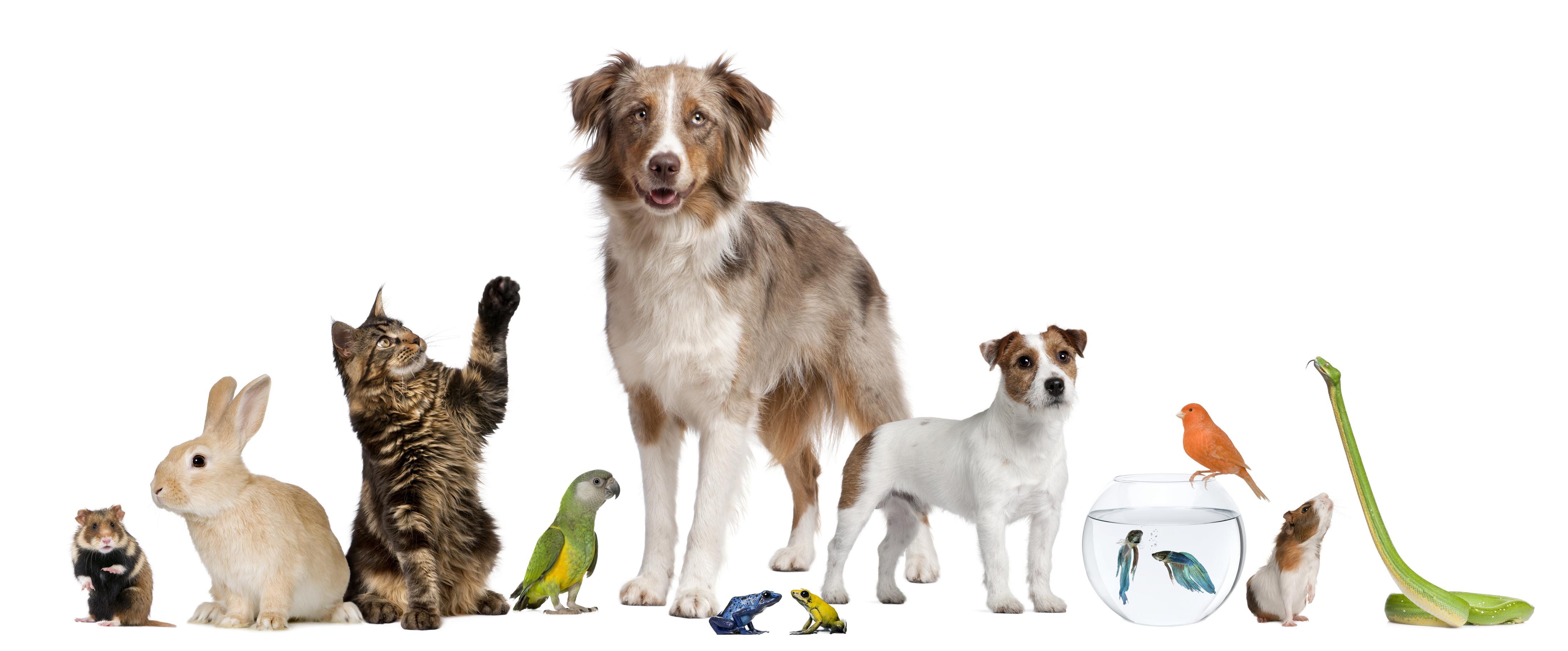 Alternative Pets
