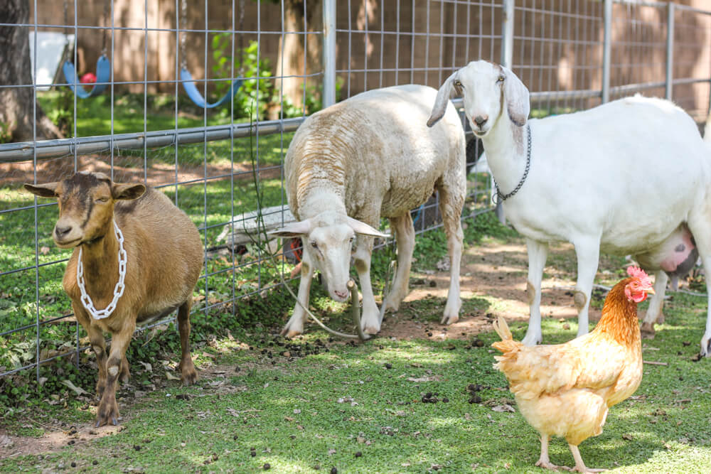 3 Pets You Can Easily Raise on a Ranch