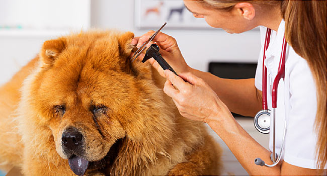 7 Reasons why regular vet check-up for dogs in important
