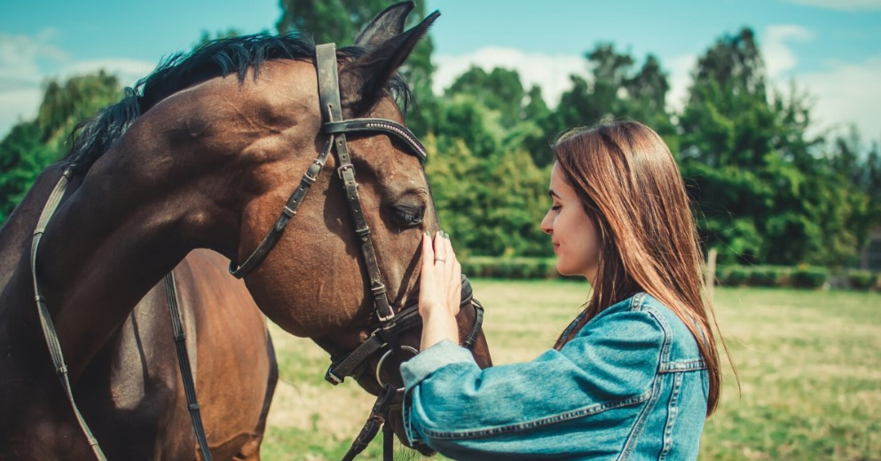 How To Be a Good Horse Owner