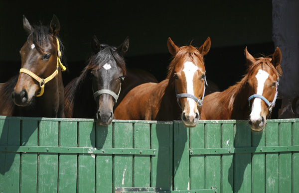 The Importance of Carrying Horse Insurance